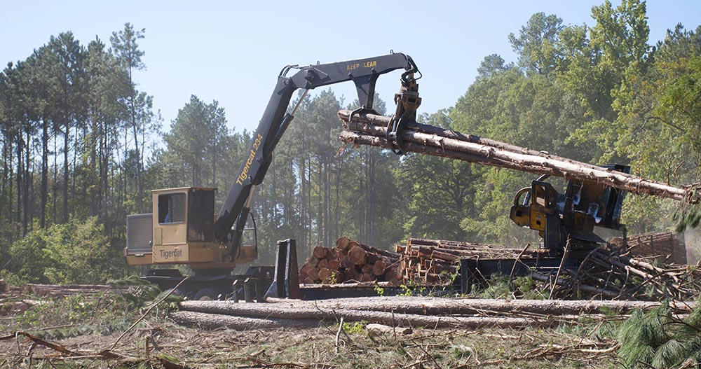 Tigercat 234 loader delimbing 28-year-old pine in Jamestown, Louisiana.