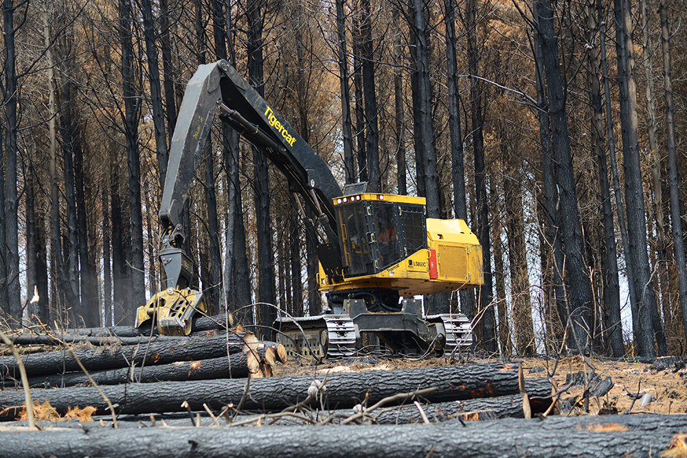 An LS855C harvester working in a timber tract that previously suffered a forest fire.