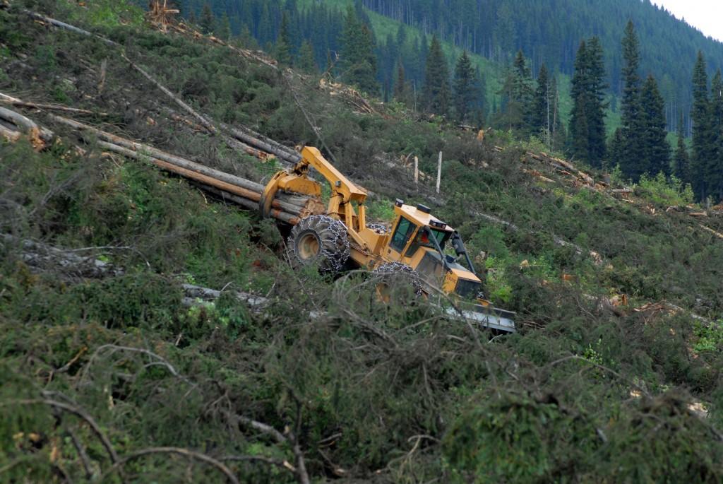 A Tigercat 4-wheel skidder pulling big wood down a mountain.