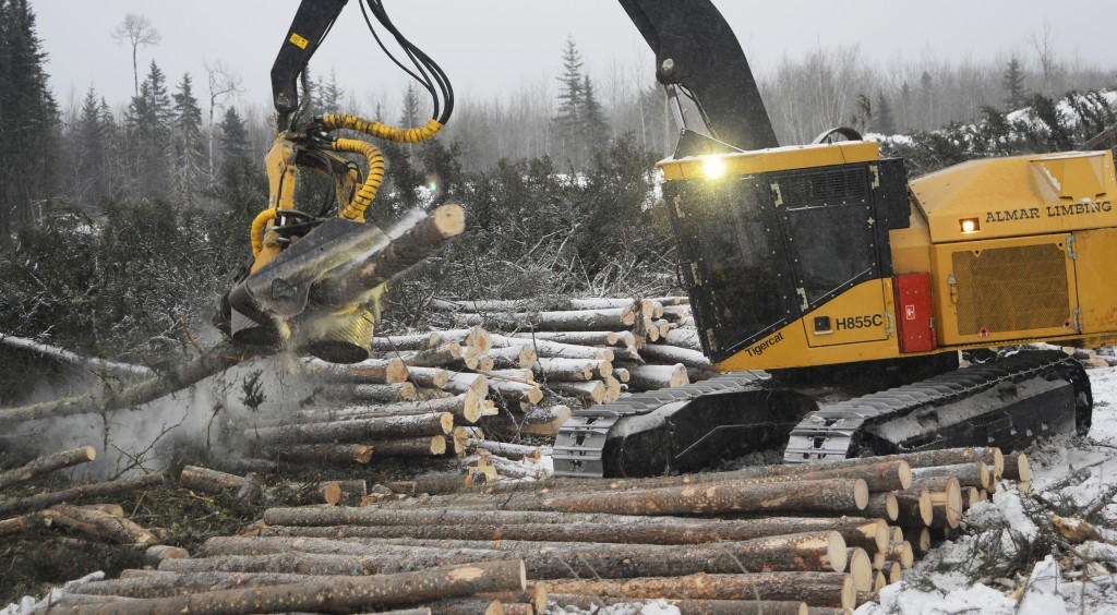 Almar's processors working in challenging spruce. A harvester processes a log in cold conditions, cut-to-length logs are stacked nicely in a row next to where the operator is working.