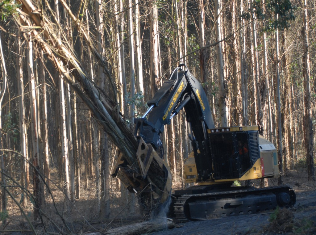 A Tigercat 855C with blue gum trees in it's grapple.