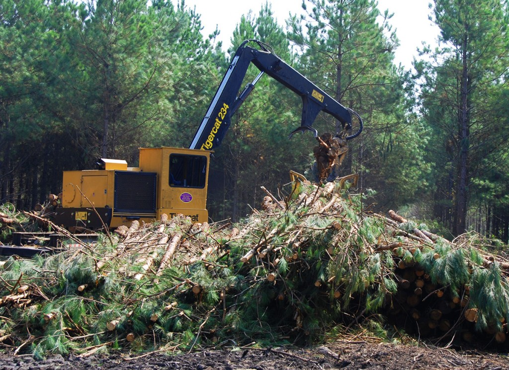 A large pile of pine trees are piled up in front of a Tigercat 234 log loader. The whole image is green from the forest and trees aside from the yellow Tigercat standing out in the middle.