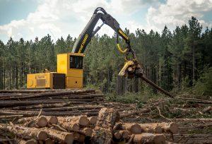 Troncos en primer plano orientados hacia el H250D de Tigercat mientras este procesa un pino.